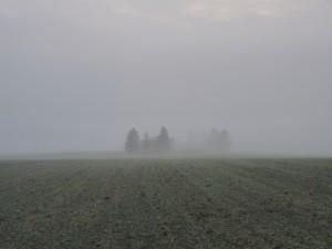 Mgła radiacyjna (fot. Igor Laskowski)