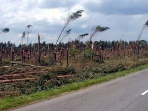 Zniszczony las (źródło: https://tokolno.wordpress.com/okolica/4-lipca-2002/)