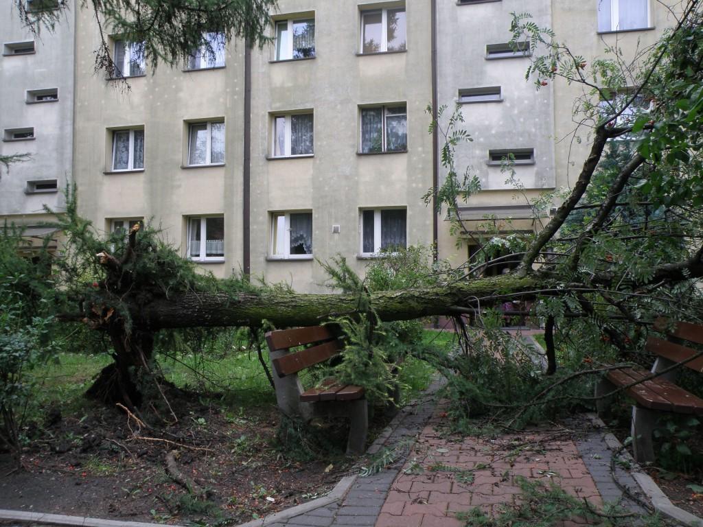 Chorzów, ul. Gajowa