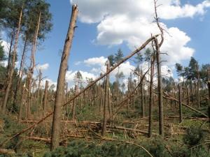 Przykład udokumentowanych szkód po przejściu burzy z huraganowymi porywami wiatru. Fot. Wojciech Pilorz