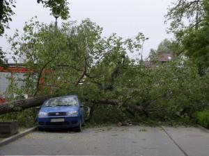 Drzewo powalone na samochód. Fot. Sebastian Kupczyk