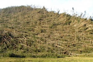 Zniszczenia w wyniku bardzo silnego fenu w Dolinie Kościeliskiej. Fot. Grzegorz Zawiślak