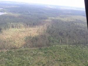 Szkody wiatrowe w nadleśnictwie Dojlidy. Fot. Jacek Bejm/Regionalna Dyrekcja Lasów Państwowych w Białymstoku.
