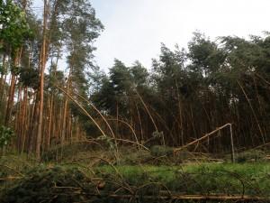 Szkody wiatrowe w lasach niedaleko miejscowości Pusta Kuźnica k. Lublińca. Fot. Wojciech Pilorz