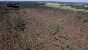 Rozległe szkody w lasach niedaleko Paradyża. Fot. Drone Vision